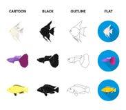 Botia, Clown, Piranha, Cichlid, Kolibri, Guppy, gesetzte Sammlungsikonen der Fische in der Karikatur, Schwarzes, Entwurf, flacher Stockbild