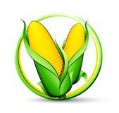 Botón maduro del maíz Imágenes de archivo libres de regalías