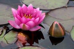 Botão cor-de-rosa Fotos de Stock