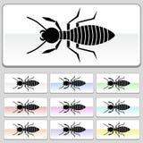Botones cuadrados del Web - termita Fotos de archivo libres de regalías