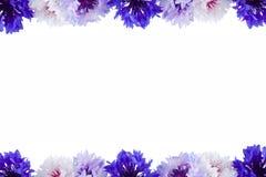 Botones del soltero aislados en un fondo blanco Foto de archivo libre de regalías