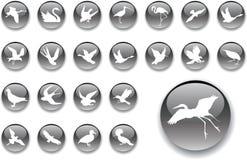 Botones grandes del conjunto - 2_A. Pájaros Fotografía de archivo libre de regalías