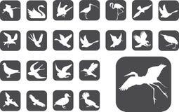 Botones grandes del conjunto - 2_Z. Pájaros Fotografía de archivo libre de regalías