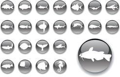 Botones grandes del conjunto - 4_A. Pescados Foto de archivo libre de regalías