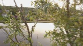 Botsing met een boom door een hommel stock videobeelden