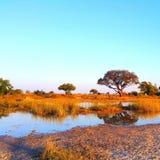 botswana fotos de stock royalty free