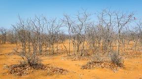 Botswana in Autumn Royalty Free Stock Photos