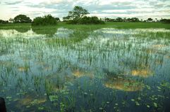 Botswana: Boattrip at sunset in the Okavango-Delta-swamps. stock photography