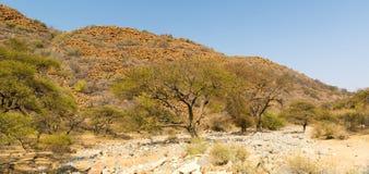 Botswana Landscape Royalty Free Stock Images