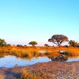 Botswana. Safari sunset Royalty Free Stock Photos