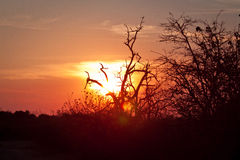 Botswana Sunset Royalty Free Stock Images