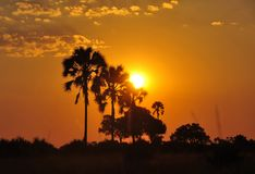 Botswana: sunset in the Okavango-Delta swamps royalty free stock images