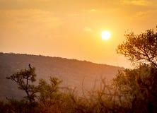 Botswana zmierzchu niebo Zdjęcia Royalty Free