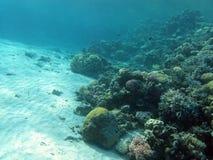 Botten av det tropiska havet med korallreven Arkivbild