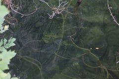 Botten av granitvillebrådet Arkivfoton