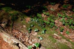 Botten av skogen Royaltyfria Foton