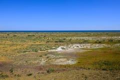 Botten av torka upp av havet royaltyfria bilder