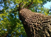 Botten beskådar av treen Arkivfoton