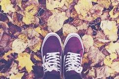 Bottes élégantes de suède de Bourgogne dans des feuilles d'automne tombées Photo stock