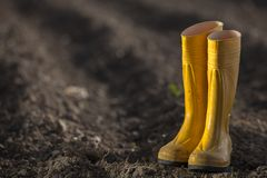 Bottes jaunes Image libre de droits