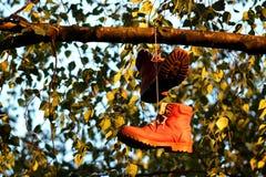 Bottes sur l'arbre Photographie stock