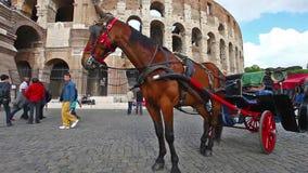 Botticelle σε Coliseum απόθεμα βίντεο