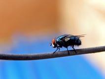 Bottiglia blu Fly2 immagini stock
