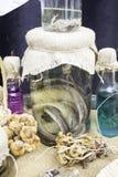 Bottiglia con la rana Immagini Stock
