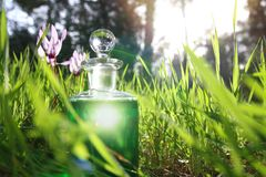 bottiglia con pozione verde magica nella foresta a luce solare Fotografia Stock