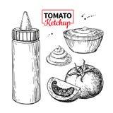 Bottiglia della salsa del ketchup con i pomodori Illustrazione di vettore Sapore dell'alimento illustrazione di stock