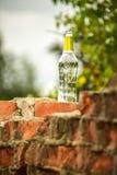 bottiglia di birra nel parco Immagine Stock Libera da Diritti