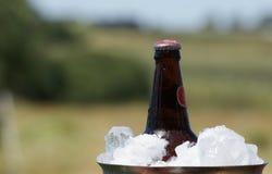 Bottiglia di birra in secchiello del ghiaccio Fotografie Stock