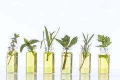 Bottiglia di olio essenziale con BIANCO del herbsON Immagini Stock