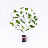 Bottiglia di olio essenziale con la foglia santa del basilico dell'erba, Immagine Stock