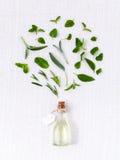 Bottiglia di olio essenziale con la foglia santa del basilico dell'erba, rosmarino, oreg Fotografia Stock Libera da Diritti