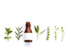 Bottiglia di olio essenziale con la foglia santa del basilico dell'erba, rosmarino, oreg Immagine Stock