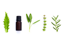 Bottiglia di olio essenziale con la foglia santa del basilico dell'erba, rosmarino, oreg Immagini Stock Libere da Diritti