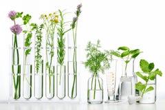 Bottiglia di olio essenziale con le erbe immagine stock