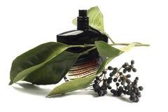Bottiglia di profumo, accessorio personale, odore fragrante aromatico Fotografia Stock