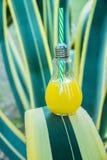 Bottiglia di vetro della lampadina con i frutti tropicali arancio di recente urgenti Juice Standing sulla foglia dell'agave Spiag Fotografie Stock
