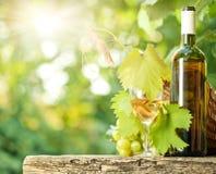 Bottiglia di vino bianco, vite, vetro e mazzo di uva Fotografie Stock Libere da Diritti