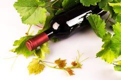 Bottiglia di vino rosso con le foglie di vite verdi Fotografia Stock Libera da Diritti