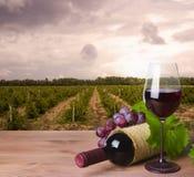 Bottiglia di vino, vetro ed uva rossa sul fondo di wineyard Fotografia Stock