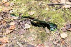 Bottiglia rotta sulla terra nel forestobject, natura, inquinamento Fotografia Stock