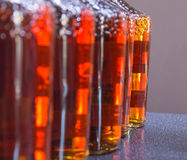 Bottiglie del cognac in una fila Fotografia Stock Libera da Diritti