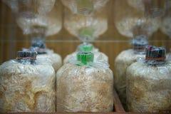 Bottiglie del fungo Fotografie Stock Libere da Diritti