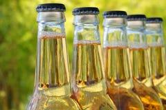 Bottiglie di birra Fotografie Stock Libere da Diritti