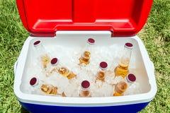 Bottiglie di birra in scatola più fresca con ghiaccio immagine stock libera da diritti