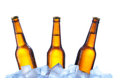 Bottiglie di birra su ghiaccio fotografie stock libere da diritti