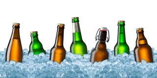 Bottiglie di birra su ghiaccio Fotografia Stock Libera da Diritti
